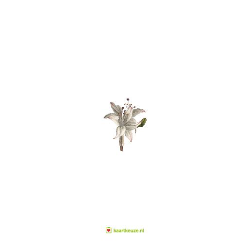 achterkant Trouwkaart witte bloemen